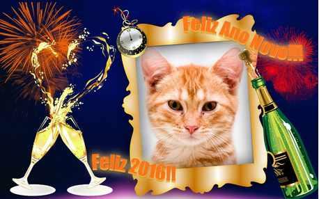 Moldura - Feliz Ano Novo 2016