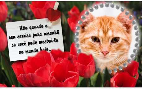 Photo FrameNao Guarde seu Sorriso