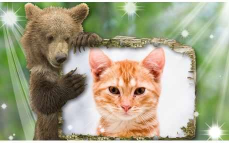 Moldura - Urso