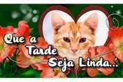 Tarde-Linda-com-Flores