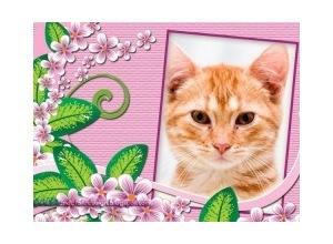 Flores-com-moldura-rosa