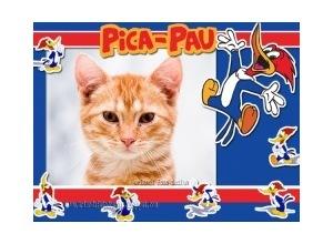 Pica-Paus