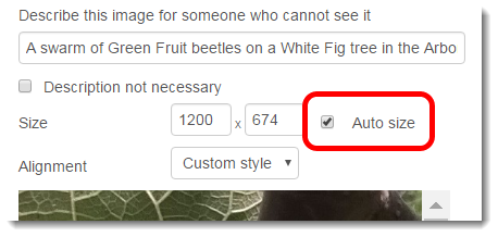Auto size checkbox is ticked