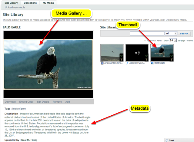 To view the image, click the thumbnail of the image on the right and it will be displayed in the Media Gallery Player.