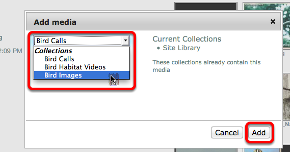 Use the dropdown box to select the Collection to add the media to, then click Add