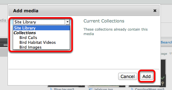 Use the dropdown box to select the Site Library or a Collection to add the media to, then click Add