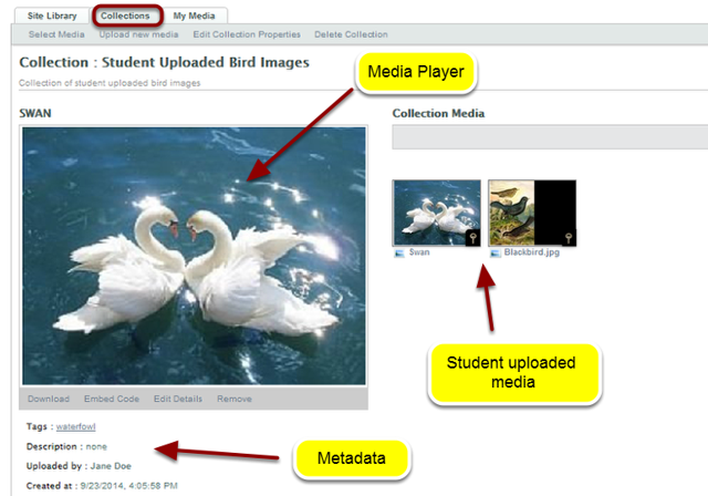 Example of student uploaded media in a Collection collaboration space: