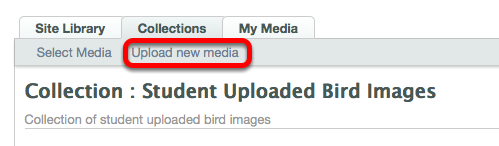 Click Upload New Media