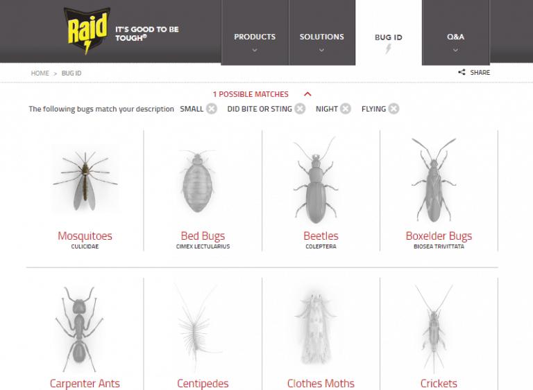 raid quiz on bugs