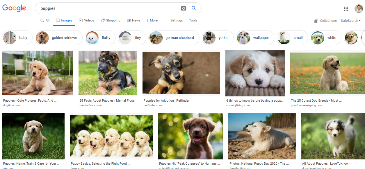 search for puppies on google
