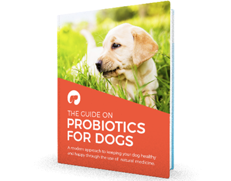 Probiotics for dogs with diarrhea get the guide on probiotics for dogs ebook fandeluxe PDF
