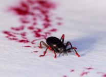 Steven Kutcher: The Bug Man