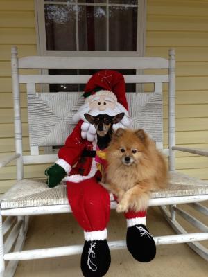 Joey and Simba with Santa