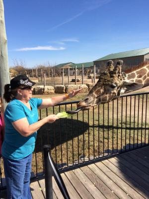Feeding a giraffe at Tanganyka Wildlife Park in Goddard, KS which is just west of Wichita, KS.