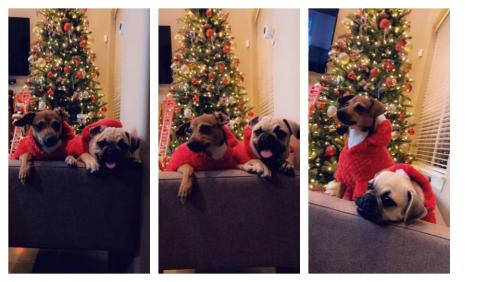 Christmas Puppy Friendship Picture