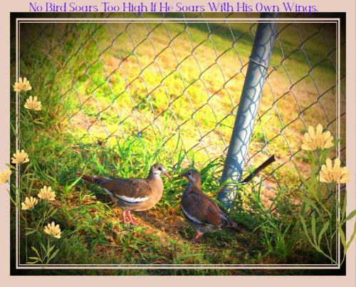Bird Friends Picture