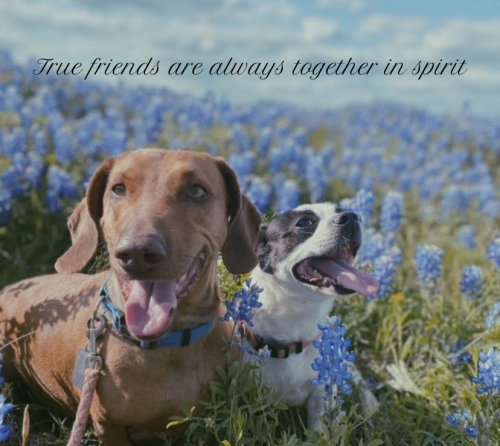 Dogs Friendship Picture