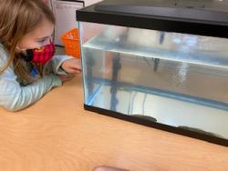 Clements/Parsons Elementary second graders leap into learning