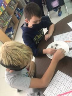 Fairview students study ecosystems through owl regurgitations