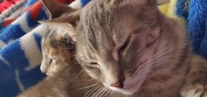 Bindi and Charlie love naps!