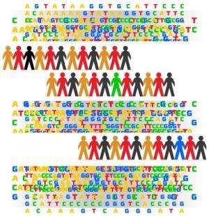 Human genome.