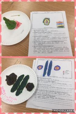 Ms. Hill's Landforms