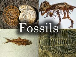Student's learn all about FOSSILS!