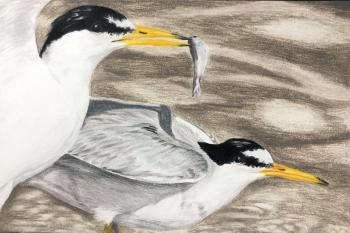AR Endangered Species Art Contest