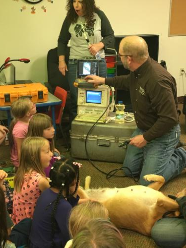 getting an ultrasound on our therapy dog