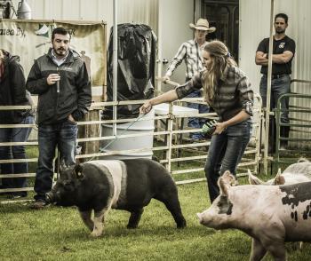 Megan showing Market Swine