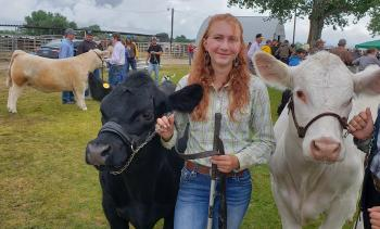 Angeline with Market Steer