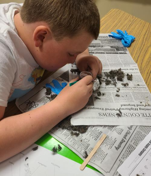 2nd-4th Grade Learn About Owl Pellets