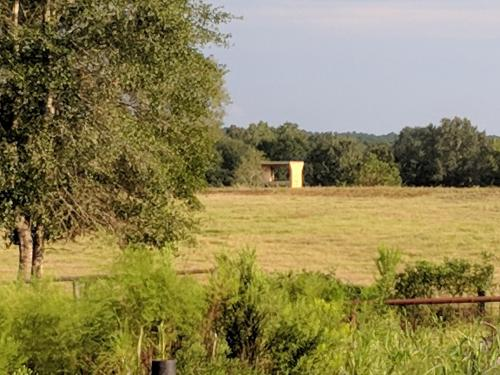 Feeder in pasture