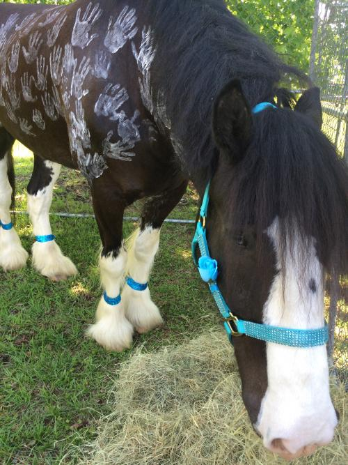 Image of Clyde the Never Give Up Horse with hand prints on his body