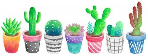 Several Cacti