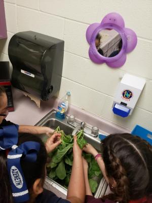 GT Students washing vegetables from their Harvest Garden