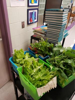 Vegetables from the Harvest Garden