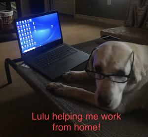 Mr. Mills and Lulu helping him work from home!