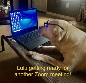 Mr. Mills Dog LuLu helping him with school work from home, pic #2!