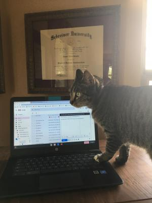Mr. Schultz's cat Evel working from home!