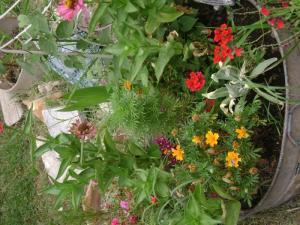 My Summer Garden!