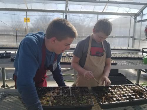 Student teaching another student to transplant flowers