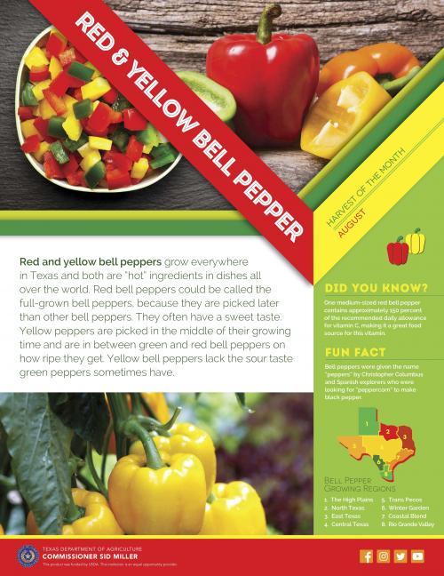 Farm fresh bell peppers