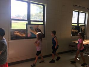 Gallery walk of all the alligator and snapping turtle pictures!