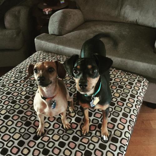 My Fur Babies!