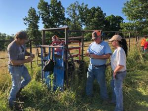 Working cattle with my husband and our friends.  We work cattle in the spring and fall.  We vaccinate and worm them.