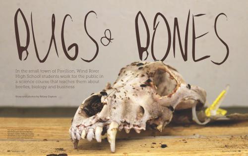 Bugs 'n Bones Article