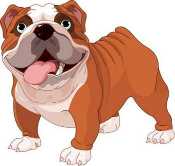a cute bulldog