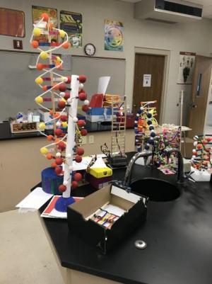 DNA Models!