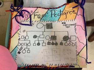 Pedigree Project